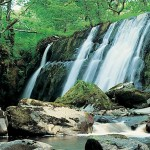 slider-forest-waterfall-2000_White